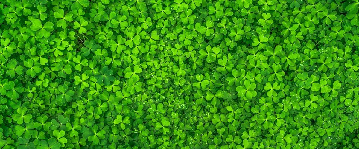 Obraz Zielonej Wody