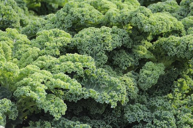 Obraz Brokuła